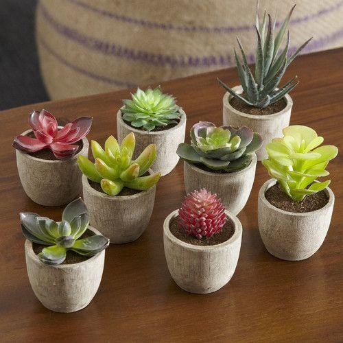 8 Piece Covina Succulent Set