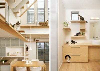 VERY cool house designed with cats in mind!