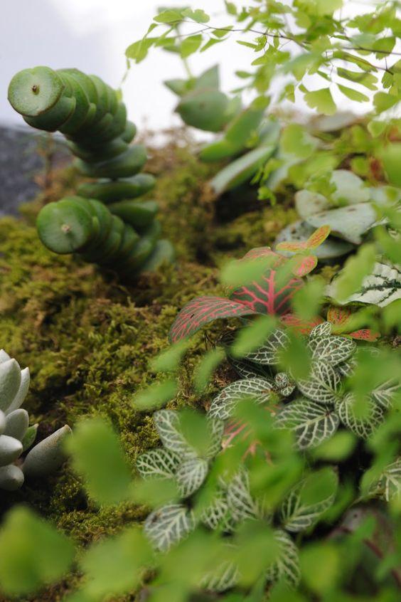 grow little terrarium: Diy Terrariums, Indoor Gardens, Air Plants, Gardening Indoors, Terrarium Plants, Mini Gardens, Design Terrariums, Miniatures Gardens, Indoor Plants