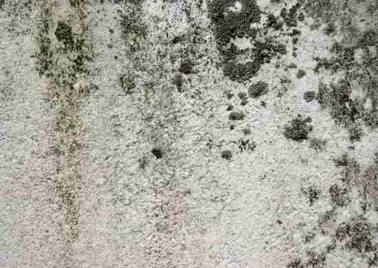 Cleaning Black Mold, or any mold- bowl of hot water and 3 tbsp of baking soda.  use a used toothbrush to scrub it off, wear a mask when cleaning this, when done, wipe down with a mix of a bowl of hot water and a half a cup of bleach