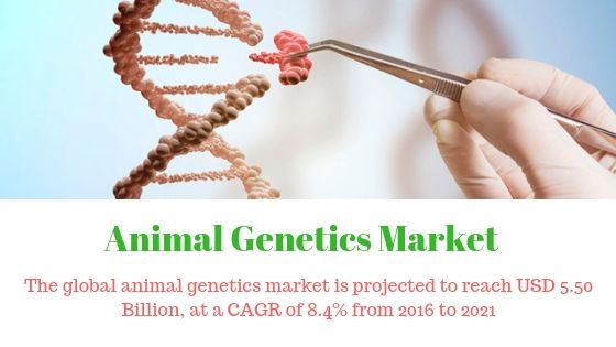 The Global Animal Genetics Market Is Projected To Reach Usd 5 50 Billion By 2021 From Usd 3 68 Billion In 2016 At A Cagr Of Genetics Marketing Primary Growth
