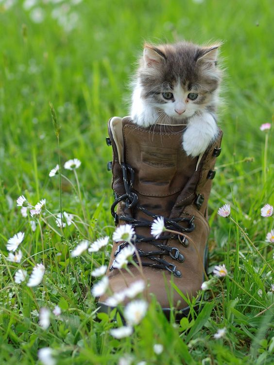 Puss in Boots  Cora Phillips via Cindy Gelinas onto Makes Me Smile or Giggle A Little