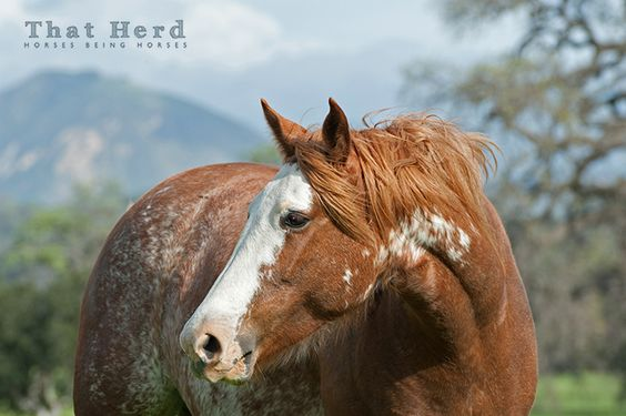 Daily Blog | That Herd | Horses Being Horses | Page 5