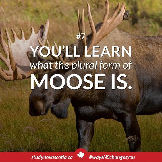 Moose? Mooses? Meese? You won't just get to know the plural you'll ...