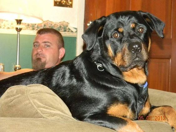 I Love My Rottweiler .jpg (720×540)