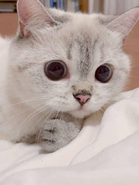 Pin Oleh I Am สาววาย Di แม ววว Bayi Kucing Kucing Bayi Binatang