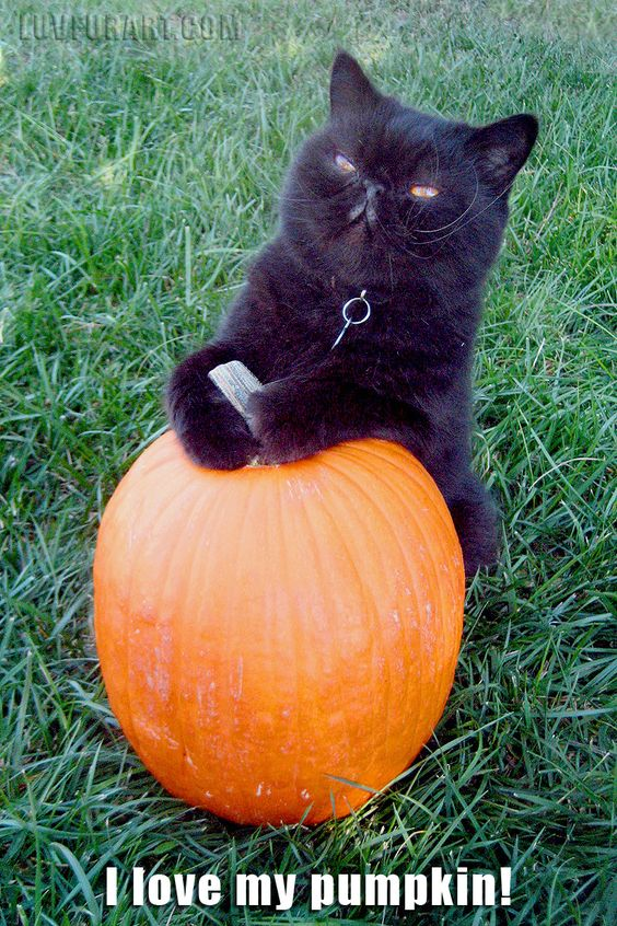 <3 my pumpkin.