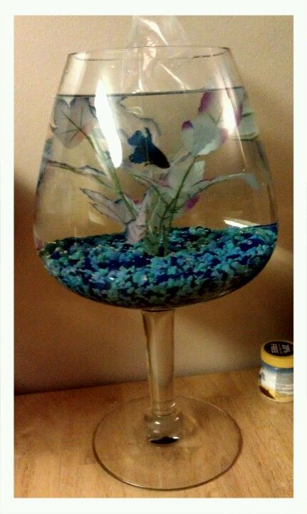 Oversized brandy glass betta fish bowl try me for Caring for a betta fish in a bowl