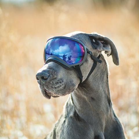 X Large Goggle Great Dane Dog Goggles Puppy Grooming