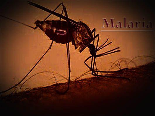 الملاريا مرض مزعج Malaria هو مرض مزعج طفيلي معدي يتسبب في حدوثه كائن طفيلي يسمى بلازموديوم و غالبا ما ينتقل عن طريق Utility Pole Malaria
