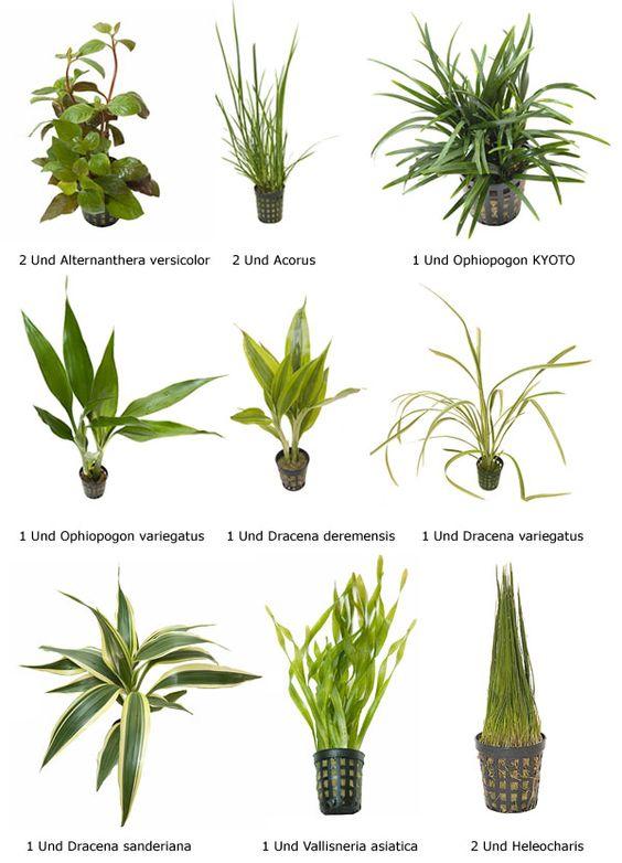 plantas acuaticas con sus nombres comunes buscar con