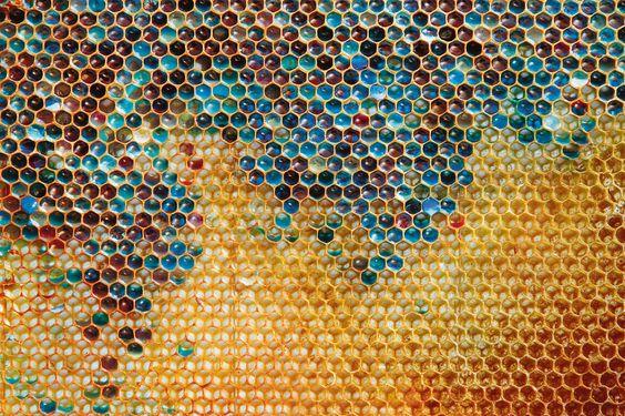 en cas de sécheresse ou de pénurie de fleurs, les abeilles peuvent changer de régime. « Si l'approvisionnement en nectar est interrompu, les abeilles récoltent n'importe quel sucre disponible », explique Tim Tucker, de la Fédération américaine d'apiculture. Les poubelles extérieures des petits commerces sont très prisées, qui regorgent de canettes de sodas usagées et d'emballages de friandises...