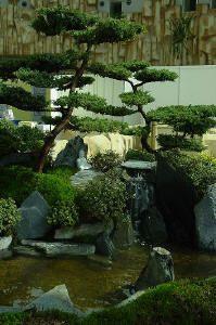 Trend Ein japanischer garten entsteht aus einer Swimmingpoolanlage Gartengestaltung im japanischen stil Umgestaltung alter swimmingpoolanlagen in natuerliche