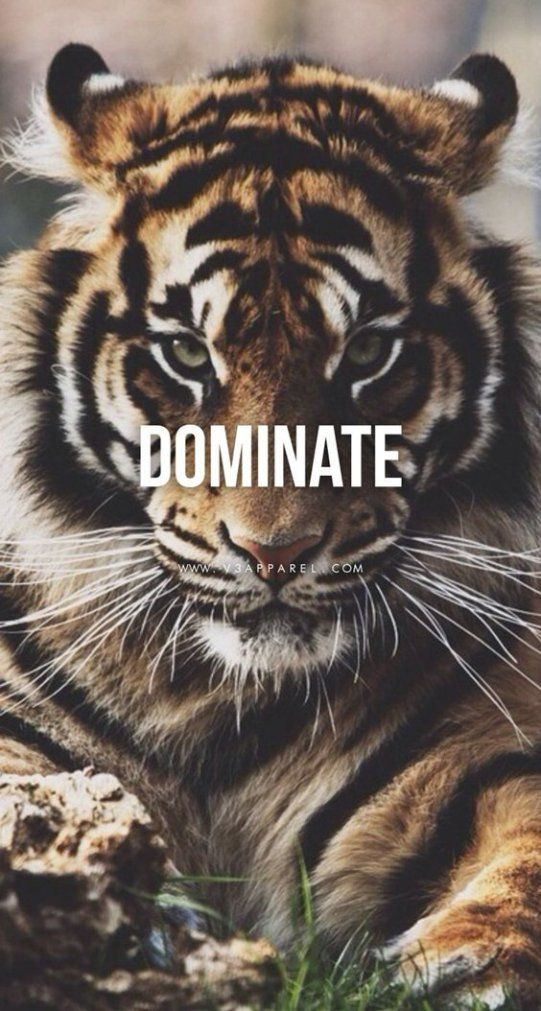 Tiger Motivational Quotes On Instagram Double Tap And Comment