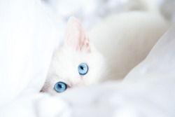 """lI s'appelait """"Mousse"""". Ce n'est pas sa photo, mais le même chaton <3"""
