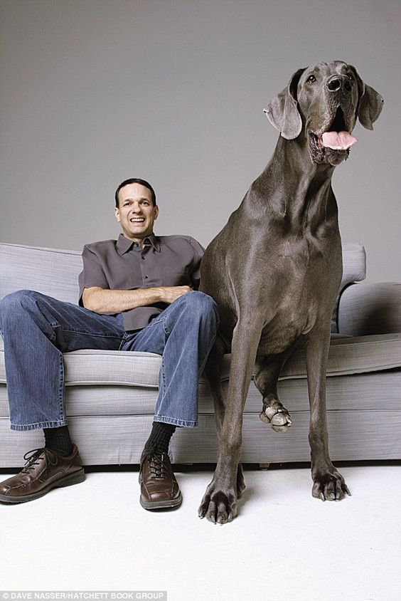 Giant George the 7 Foot Dog.