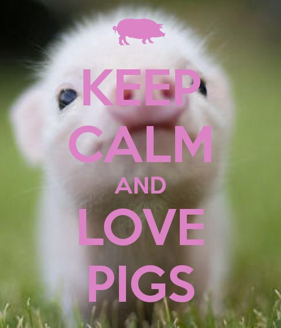 KEEP CALM AND LOVE PIGS i saw this and knew it was love at first sight
