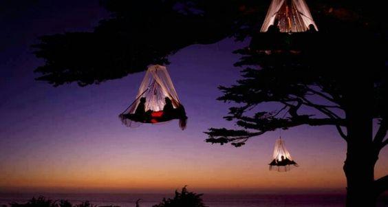 Tree camping?