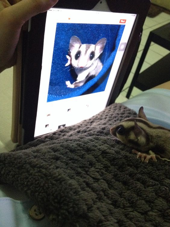 My sugar glider may like this baby from Pinterest.