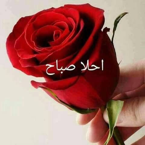 أحلى صباح هي أمي الصبوحا Good Morning Arabic Morning Greeting Beautiful Roses