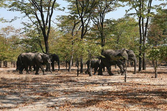 Si buscas un safari en coche o a pie auténtico, en un medio natural único, rico en fauna y flora...Si buscas eso, tu lugar está en Malawi, elegido por muchos turistas para hacer safaris de lo que no se olvidan.