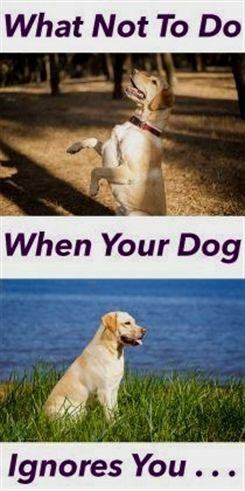 Service Dog Training In My Area Dog Training Toys Dog Training