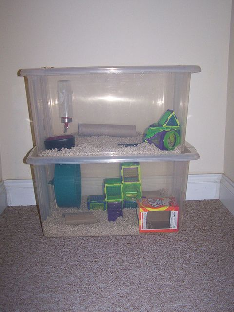 Homemade hamster cages recent photos the commons getty for Diy hamster bin cage
