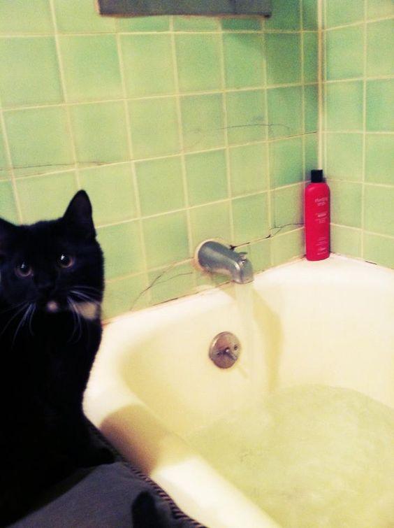 Sirius Black #cat