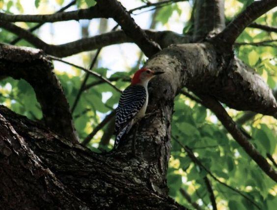 Woodpecker by Scott David, via 500px