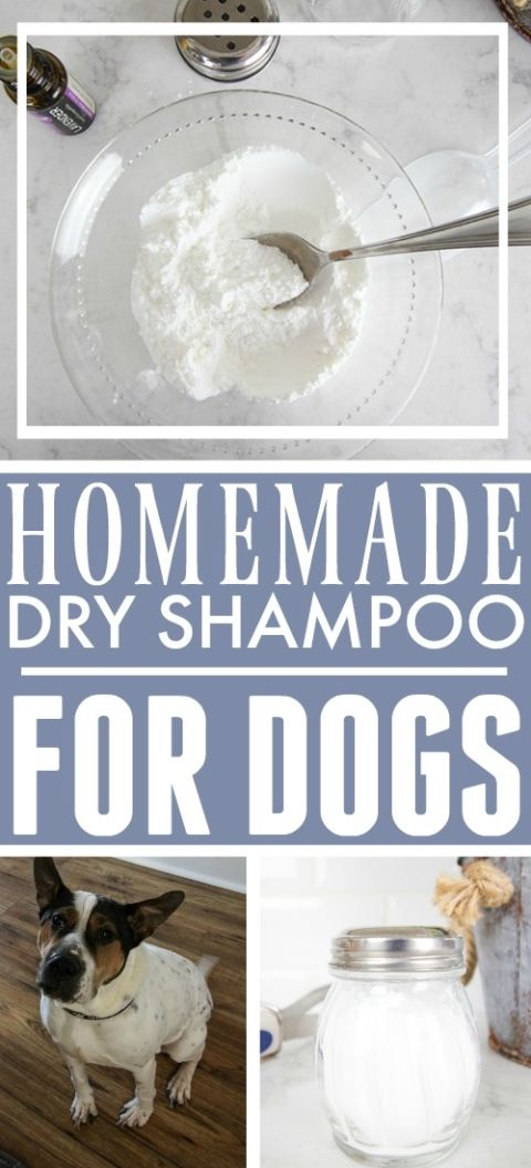 Recipe Calm Rashes Welts And Soothe Itchy Skin With This Applecidervinegar Rinse Via Dogsnatura Itchy Dog Shampoo Itchy Dog Dog Allergies Remedies