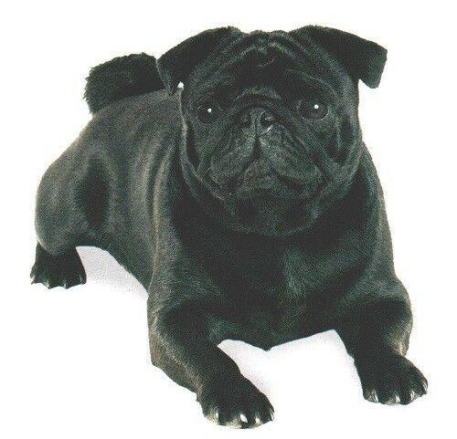 Details About Pug Black Dog Laying Dog Twelve Identical 6 Inch