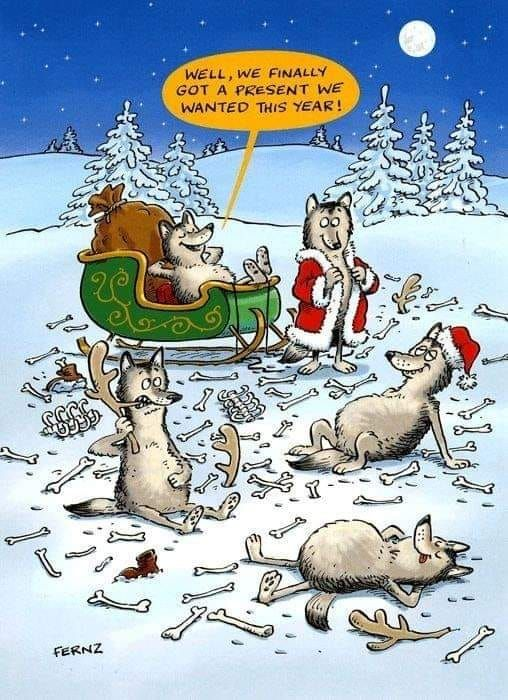 Pin by Connie Witherell on WILD THINGS in 2020 | Funny christmas