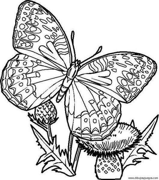 Dibujos De Mariposas Dificiles Para Colorear Dibujos De