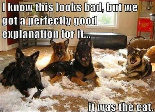 "Hahahaha! This is great :) Yeah... We had a tendency to blame ""the bears"" and ""the dog"" in my house growing up! This just makes me smile!"