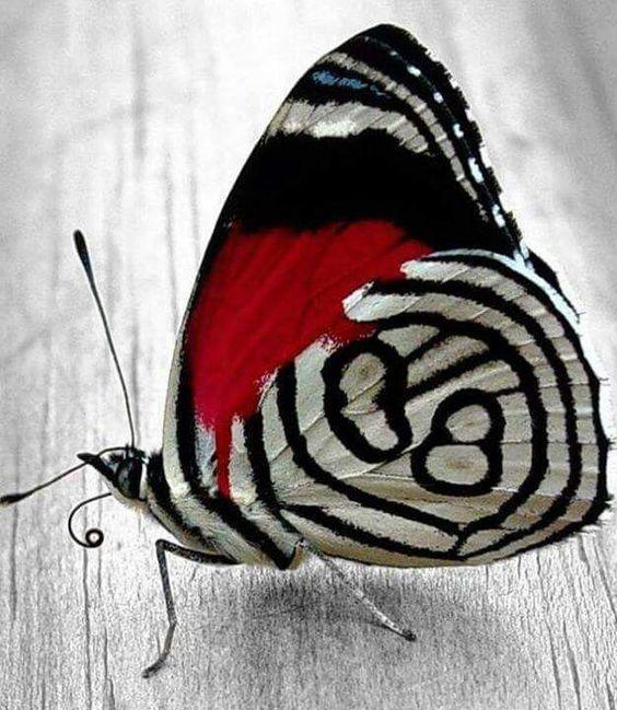 Papillon. Butterfly
