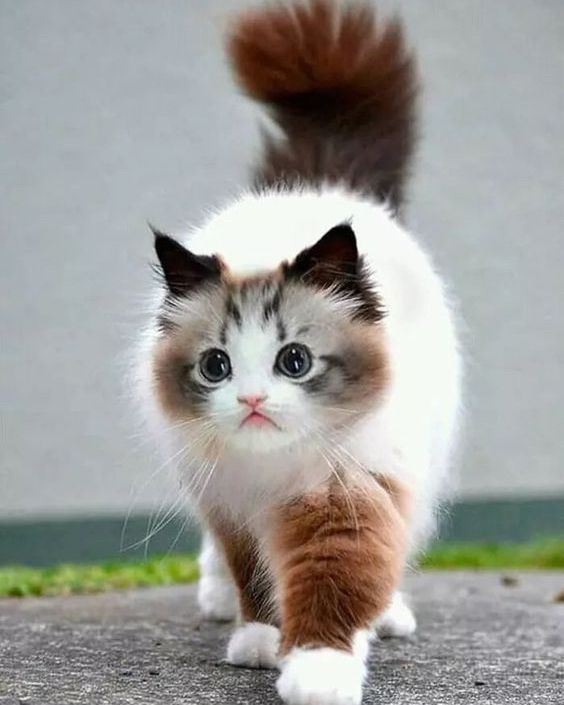 These Amazing Cats Will Make You Happy Cats Are Fascinating