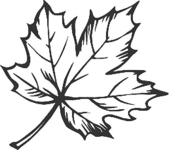Line Drawing Maple Leaf Google Search Tshirt Design