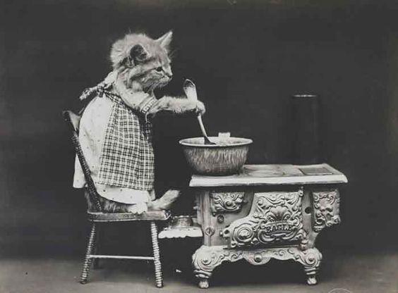 LOLcats--11