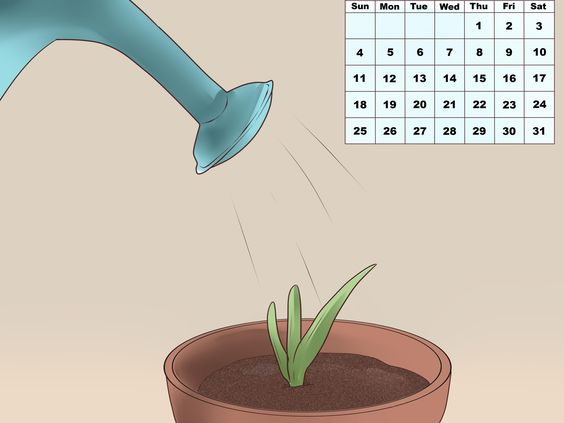 Aloe vera aloe vera and plantes on pinterest - Plante qui fait dormir ...