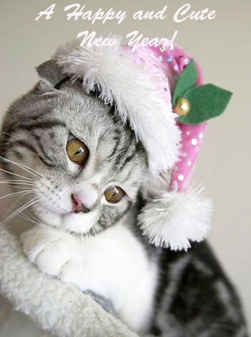 Happy New Year Cat wishing a Happy and Cute New Year.  For More Happy New Year cats, visit https://www.facebook.com/funholidaycats