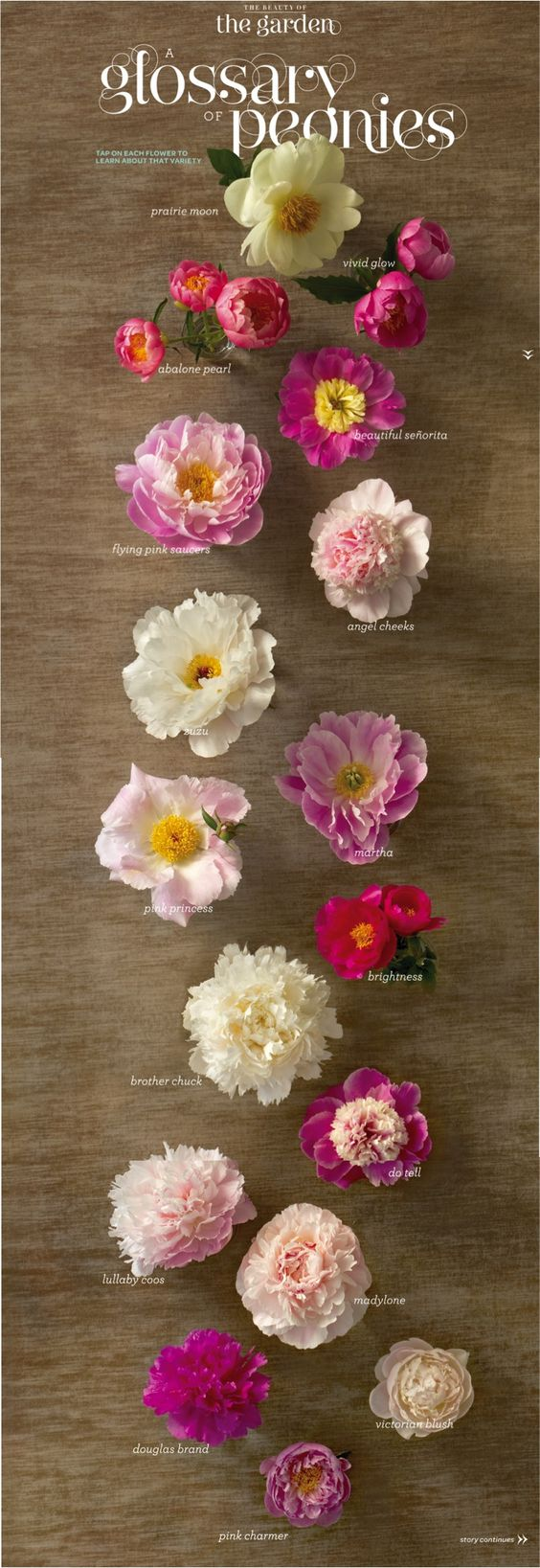 want Peonies in my bouquet. Didn't know there are so many different kinds!