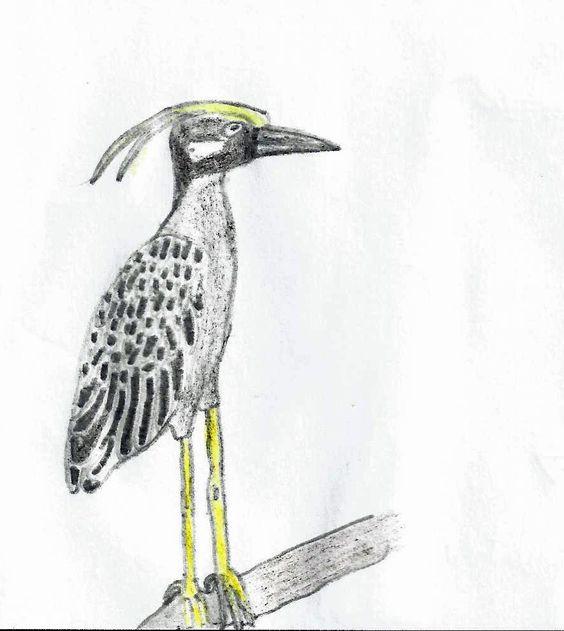 Panama Birdwatching
