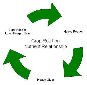 More crop rotation...: