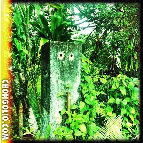 Photofriday15- Bush Monster #chongolio