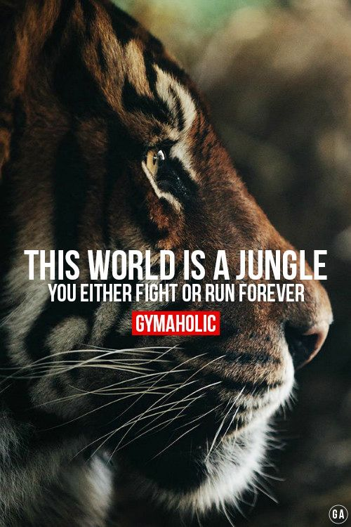 Fight or Run !  http://www.gymaholic.co  #fit #fitness #fitblr #fitspo #motivation #gym #gymaholic #workouts #nutrition #supplements: