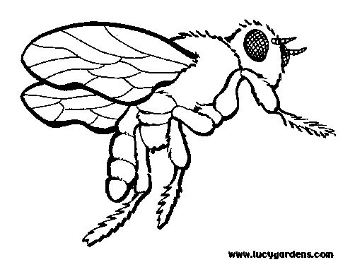 coloring  honey bees and coloring pages for kids on pinterest