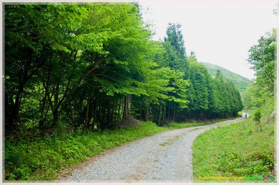 Con đường mòn trên núi Jeamsan