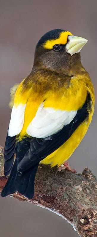 Les plus beaux oiseaux  E40eb387cd3f4cd6032c8e5e5effe49a