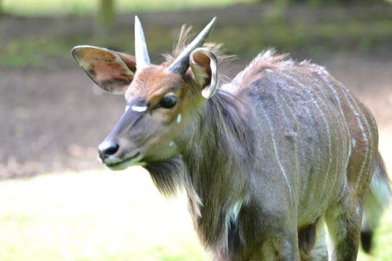 The strong head of the family, Animal Park Stroehn