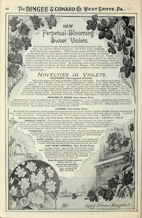 1899 - Our new guide to rose culture : - Biodiversity Heritage Library
